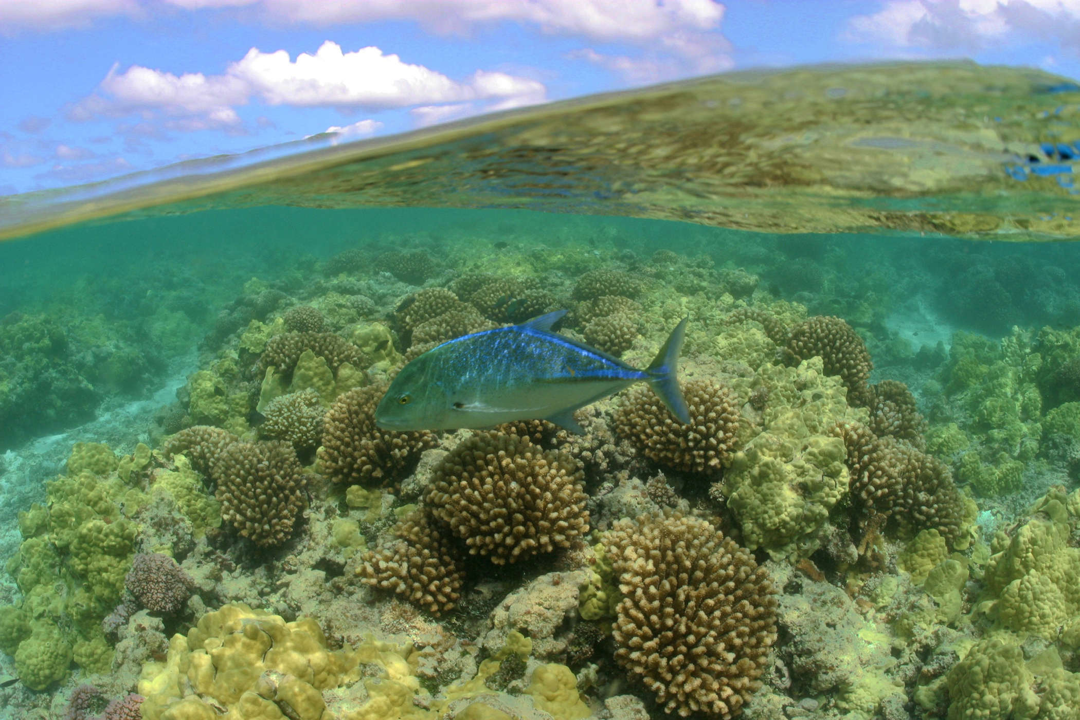 "President Obama quadrupled the size of the Papahānaumokuākea Marine National Monument off the coast of Hawaii, creating the world's largest marine protected area. When he declared National Oceans Month in June, he stated, ""Oceans and their nearby regions are also highly vulnerable to the effects of a changing climate -- a once-distant threat that is now very present and is affecting ecosystems and shoreline communities on every coast. Rising sea levels, coastal storms, and a growing risk of erosion and flooding are looming realities faced by seaside towns.""(photo by James Watt)."